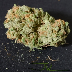 Lost Trichomes
