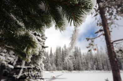 Spiky Frost