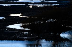 The Ladd Marsh Wildlife Area