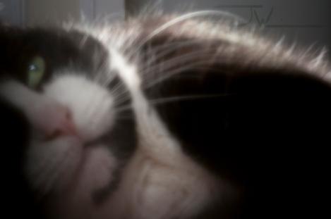 Up close pinhole.