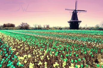 Shifted Color Windmill