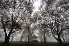 Beautiful Trees and Paper Factory Fog