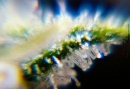 Trichome Galaxy