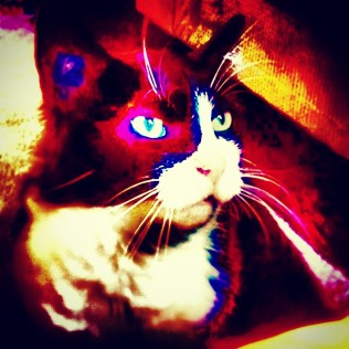 Overfiltered Lazer Cat