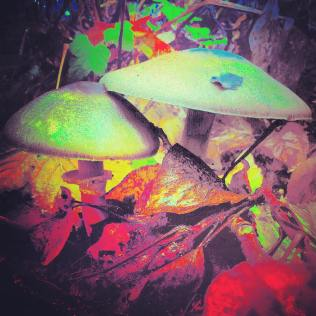Columbia River Gorge Shrooms