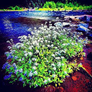 River Flowers