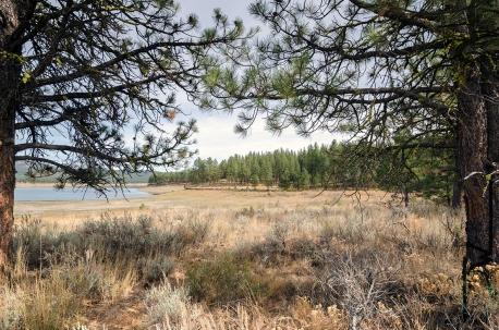 A field next to a lake.