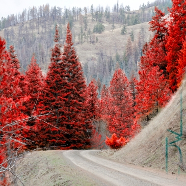 Red and Brown Drive