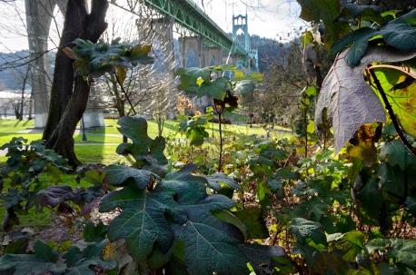 Portland Winters