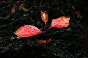 Autumn Dancer