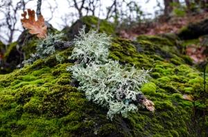 Lichen on a Stick on a Rock