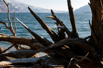 Downed Tree on the Columbia river
