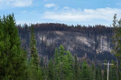 wildfire02