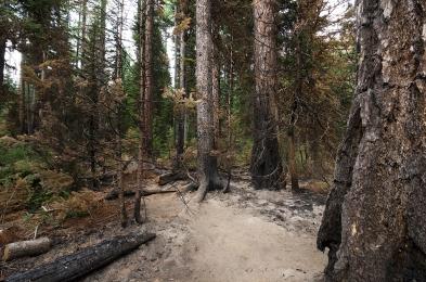 wildfire06